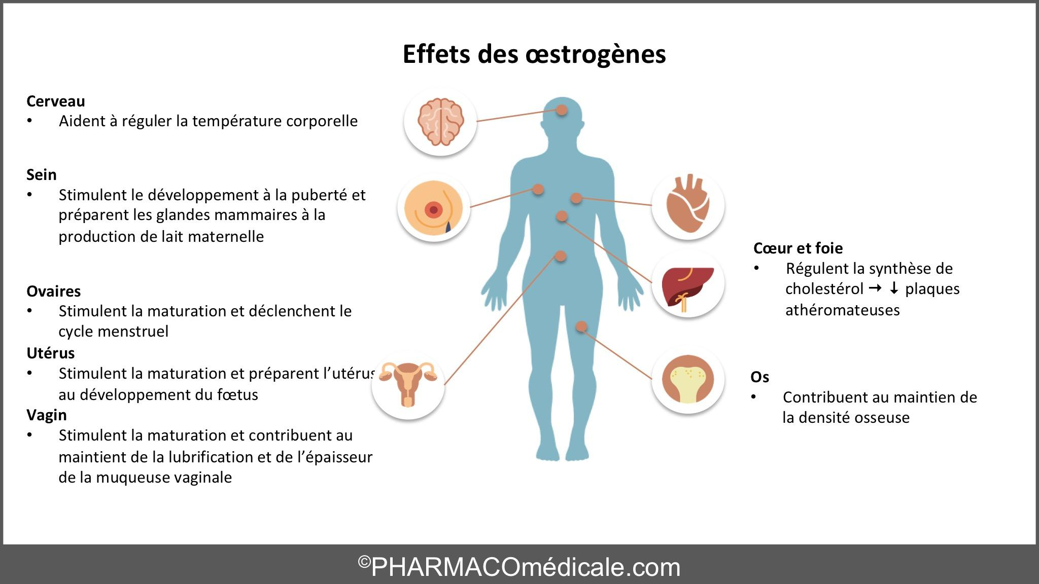 oestrogènes effets secondaires