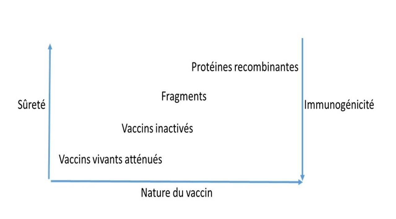 Vaccins Les Points Essentiels