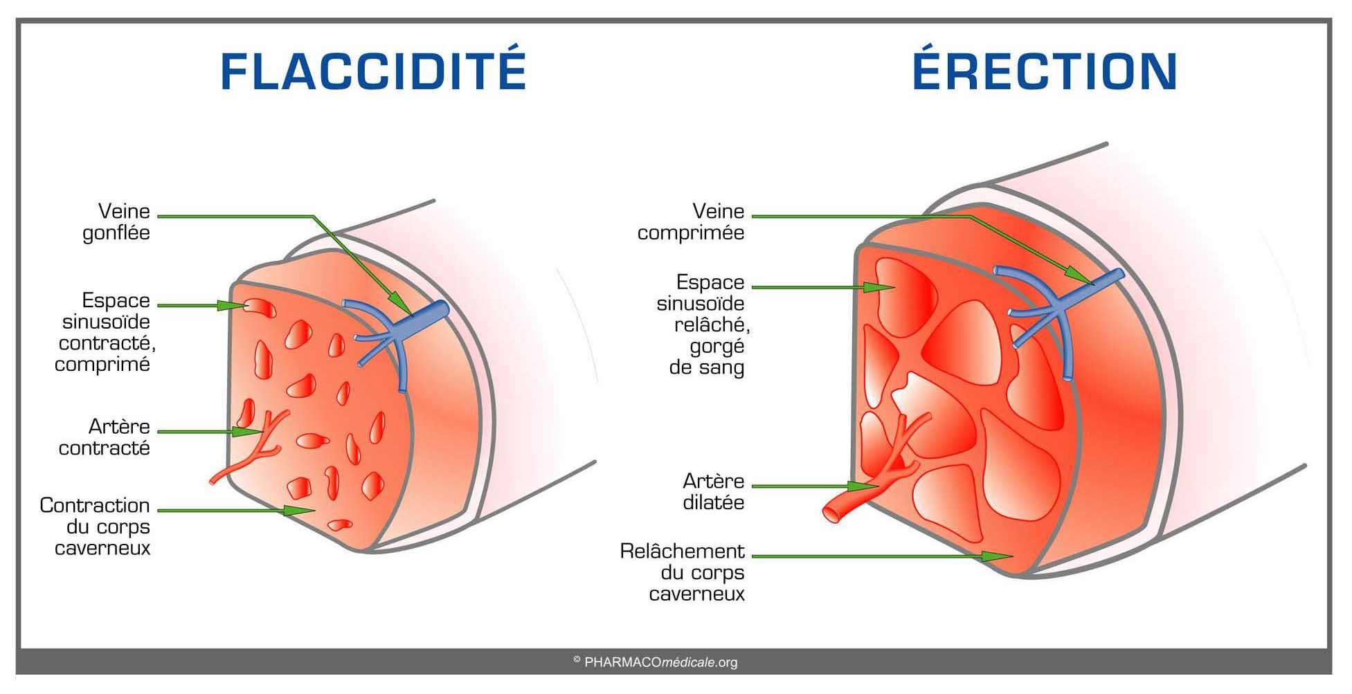 disfunción eréctil de talofeno